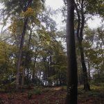 17.08.2020-jones-hill-woods-talia-woodin-40taltakingpics-2