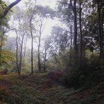 17.08.2020-jones-hill-woods-talia-woodin-40taltakingpics-4